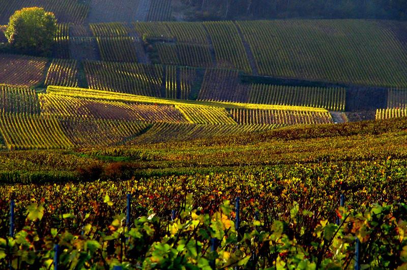 Vigne Carcassonne